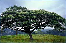 im_tree