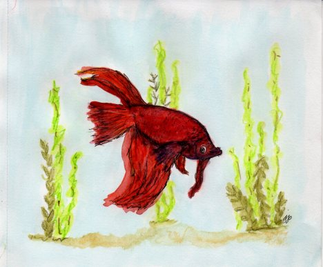 Our favorite houseguest--Evan's fish named Red.  Who knew fish had such personality? Watercolor, what else?